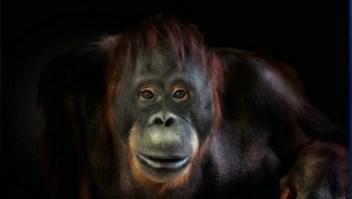 ¿Cuál es la clave para capturar una instantánea de un animal?