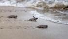 Estas tortugas marinas eclipsaron los fuegos artificiales