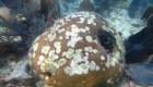 Reproducción de corales en cautiverio