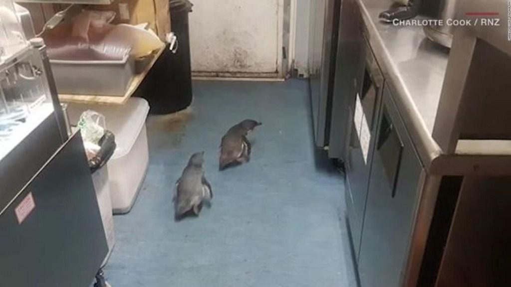 Una pareja de pingüinos encontró un restaurante del que no se quieren ir