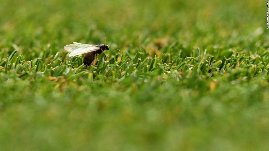 Hormigas voladoras UK