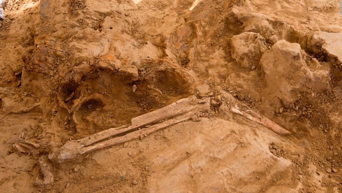 Estos restos podrían ser miembros amputados en la batalla de Waterloo
