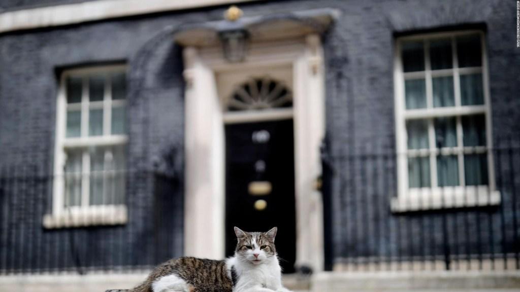El gato Larry espera conocer al nuevo primer ministro
