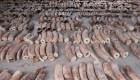 Decomisan casi US$ 13 millones en marfil de elefante africano
