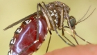 Alerta por virus de encefalitis transmitido por mosquitos