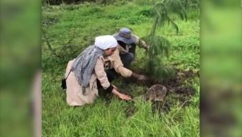 Plantan 353 millones de árboles en Etiopía en solo 12 horas