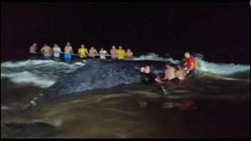 Pescadores luchan por devolver al mar a una ballena