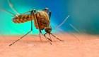 Declaran epidemia de dengue en Filipinas