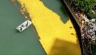 Miles de patos de goma llenaron el río Chicago