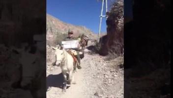 Primarias argentinas: trasladan urnas a caballo