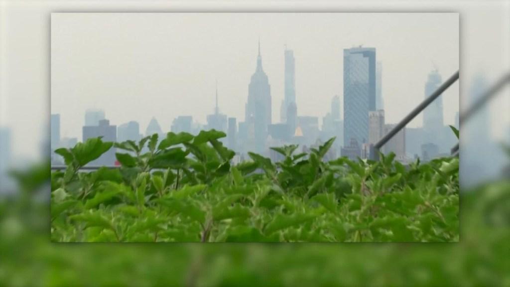 Así luce el cultivo de azotea más grande de Nueva York
