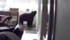 Oso entra a una casa de California y revisa el refrigerador