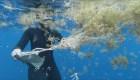 Microplásticos se amontonan en el Océano Atlántico