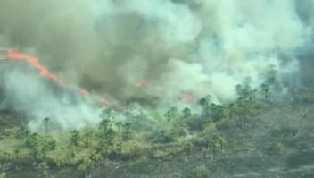 Pulmones del planeta en llamas
