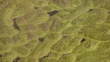 Los peligros de las algas tóxicas
