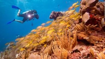 Quintana Roo contrata seguro para sus arrecifes