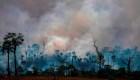 Riesgos económicos de la devastación en el Amazonas