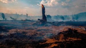 Científicos discrepan sobre el oxígeno que genera el Amazonas