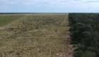 La realidad en el Chaco tras la deforestación