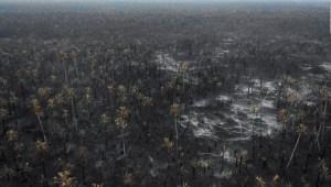 Dejar de comprar materia prima de Brasil, ¿prevendría los incendios forestales?