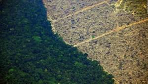 Amazonas: este es el impacto de la soya y ganadería intensiva
