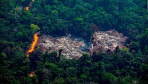 Boicot a ganaderos y las medidas de Bolsonaro: ¿Qué pasa en Brasil?