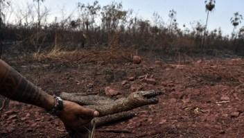 Activista de los animales habla del impacto de los incendios en la flora y fauna de Bolivia