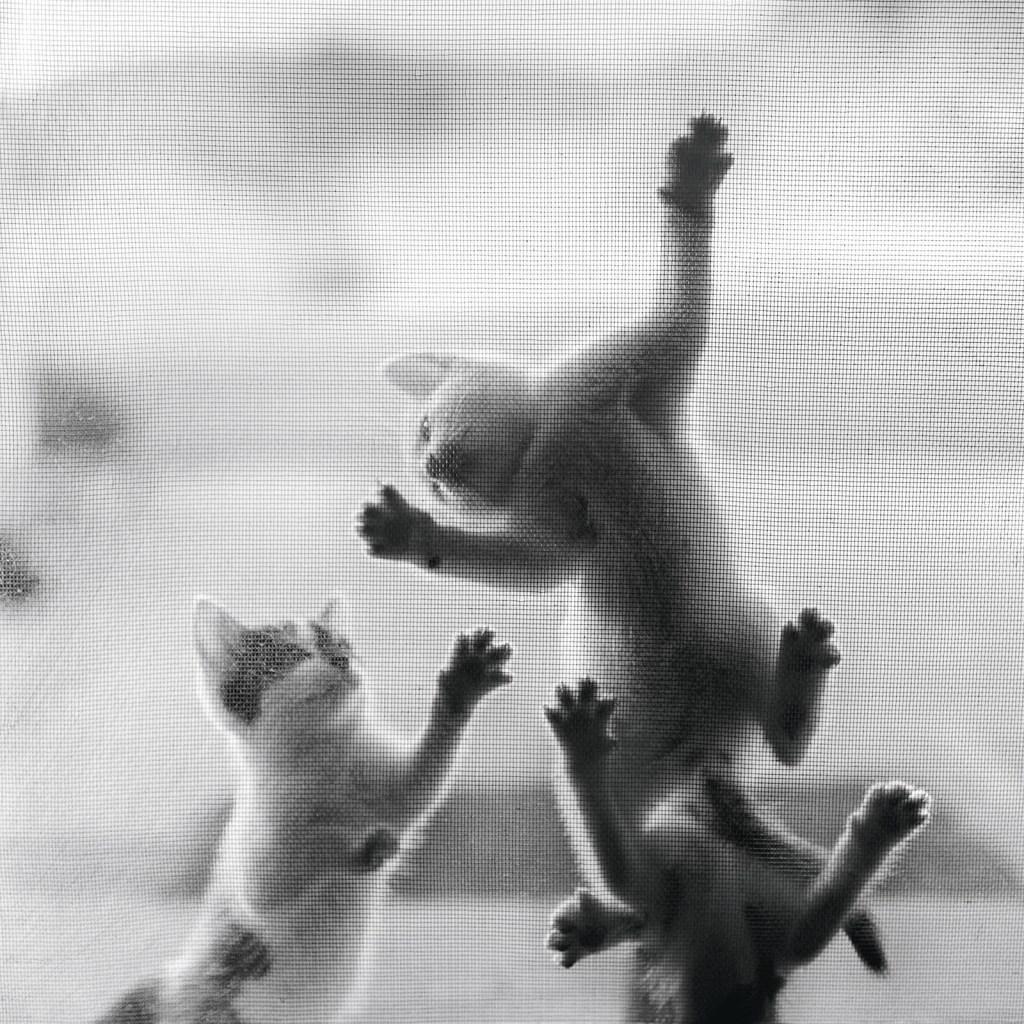 Los gatos juegan juntos en 1962.