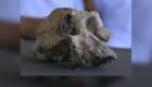 Hallan fósil con rasgos de mono y humano