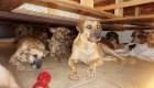 Mujer rescata a 97 perros para protegerlos de Dorian