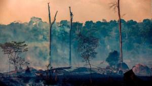 ¿Cuánto CO2 emiten los incendios forestales en el mundo?