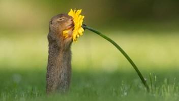La curiosa foto viral de una ardilla oliendo una flor