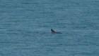 Primer avistamiento de la vaquita marina en 2019