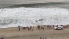 Una ballena murió en una playa de Maryland