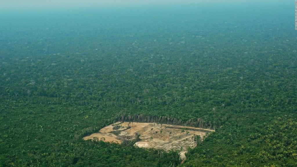 Asesinatos y deforestación en Amazonas: el informe de HRW