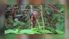 Devuelven a varias guacamayas y monos a su hábitat