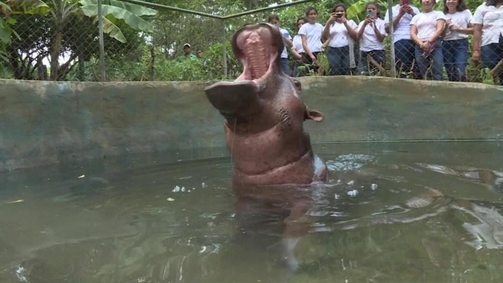 Zoológico pide ayuda para alimentar a los animales