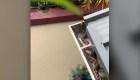 Una serpiente se refugia en el techo de una casa