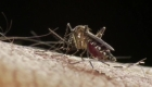 Cambio climático contibuiría a una epidemia global del dengue