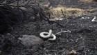 La fauna, una de las más afectadas por los incendios