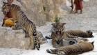 Los cinco países con más especies en peligro de extinción