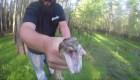 Contratan cazadores de pitones por invasión en Florida
