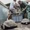 Ecuador: 309 tortugas retornan a su hábitat natural