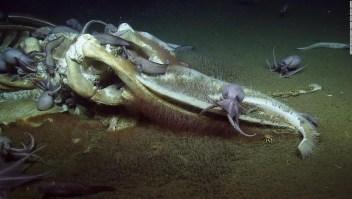 Científicos asombrados con un festín de aguas profundas