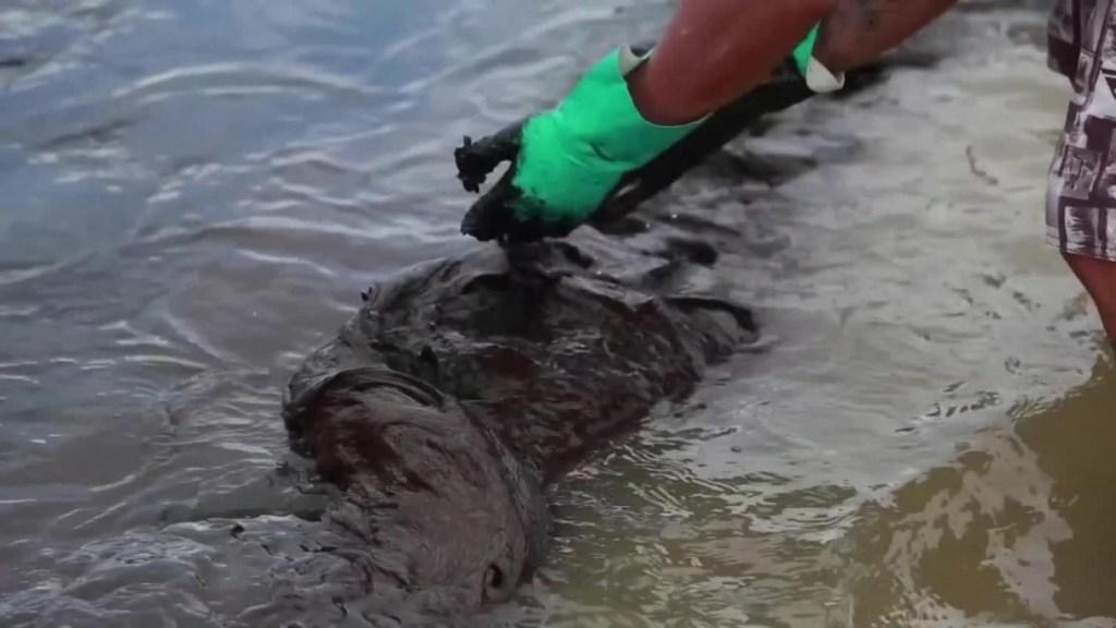 Derrame de petróleo en Brasil causa amenaza ambiental