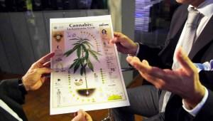 """Legalizar marihuana generaría """"miles de millones de dólares al año"""""""