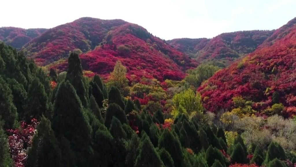 Mira la increíble transformación de estos árboles a rojo