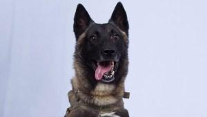conan perro al baghdadi muerte operacion isis casa blanca trump