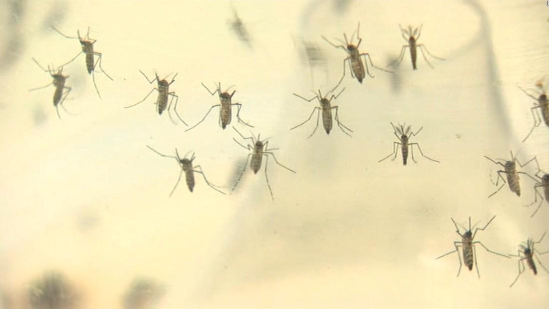 Alerta en Europa por contagios de zika