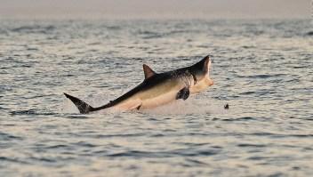 Un debate que avanza: el negocio de la caza de tiburones